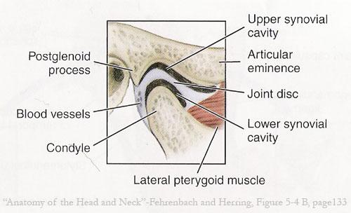 Articulatio Temporomandibularis - Temporomandibular joint - TMJ - Dr ...